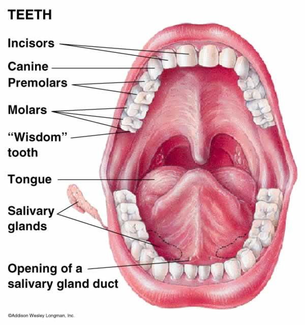 What do you recommend for reducing/eliminating periodontal infection/disease?