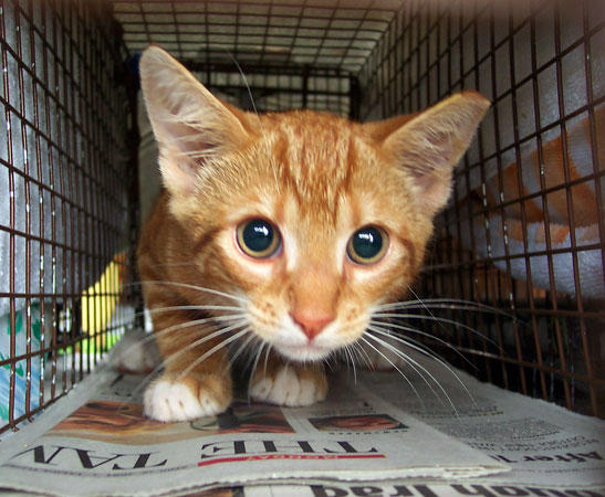 What illnesses can kids get from stray cats?