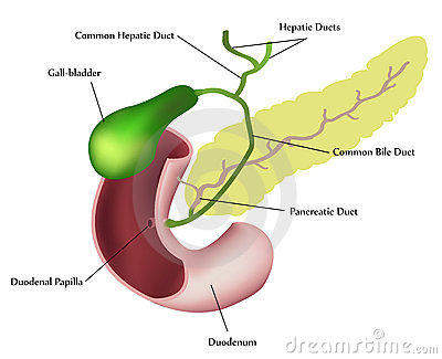 How can I tell if something wrong with my gall bladder or pancreas?