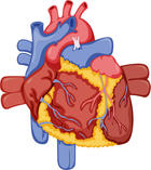 Cardiac Heart Heart palpitations Palpitation Sex Sinus