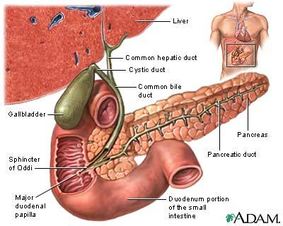What are the symptoms that a patient with gall bladder problems would have?