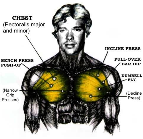 What's a good way to get more defined chest and ab muscles?