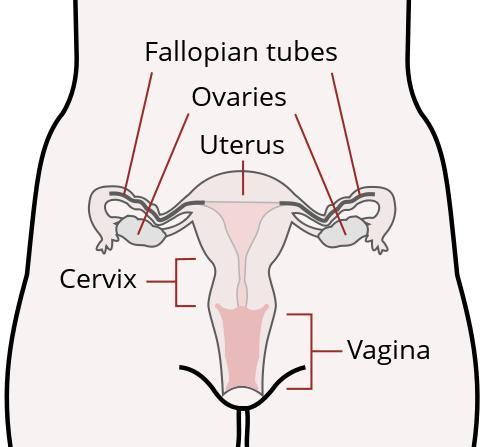 Isn't it unusual to to have a big increase in cervical mucus the day before your period?