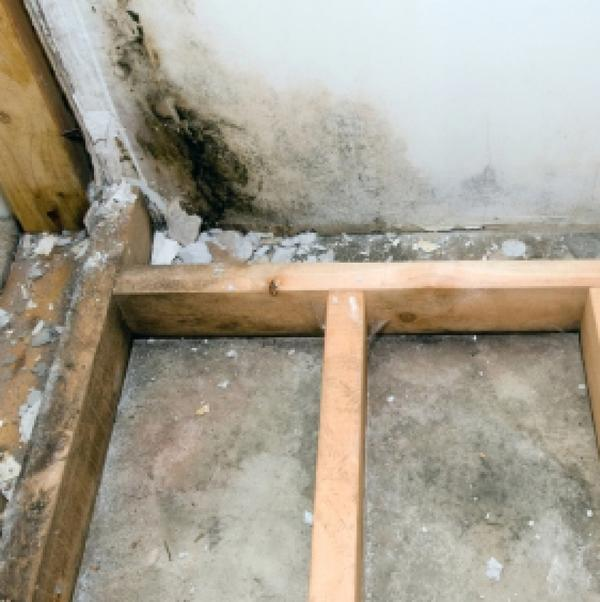 Would you please help describe the usual health problems caused by living in a damp and moldy house?
