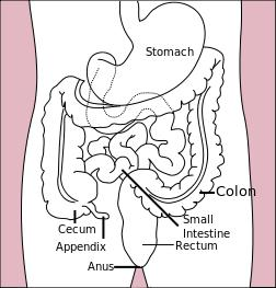 What does peristalsing bowel mean?