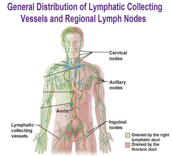 How can  leukemia affect the lymph nodes?