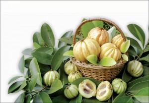 Can someone with IgA nephropathy stage 2 take pure garcinia cambogia?