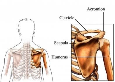 How long does it take for a bruised shoulder bone to heal?