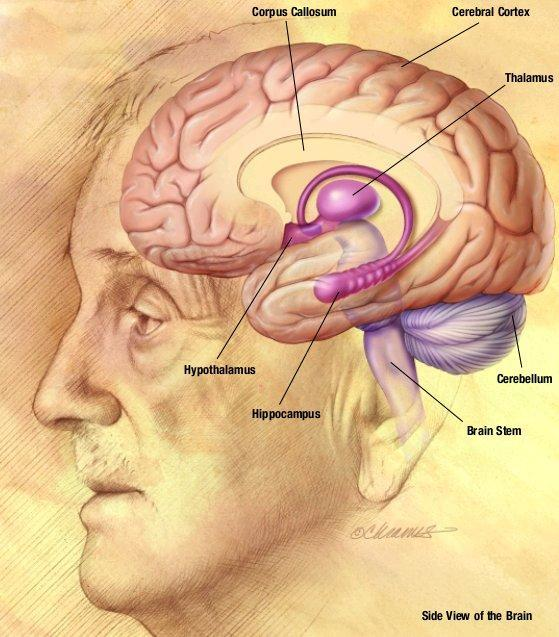 Does a whole body pet scan show the brain?