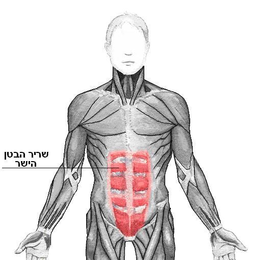 What are some abdominal exercises for diastasis recti?