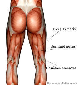 What is the best method for recovery from groin and hamstring injuries?
