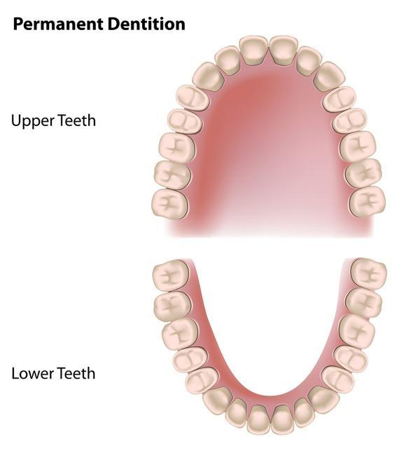 Can dentures help reduce bone loss in areas where teeth have been extracted?