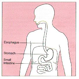 My stomach or esophagus seems to be trembling/quivering what is it?