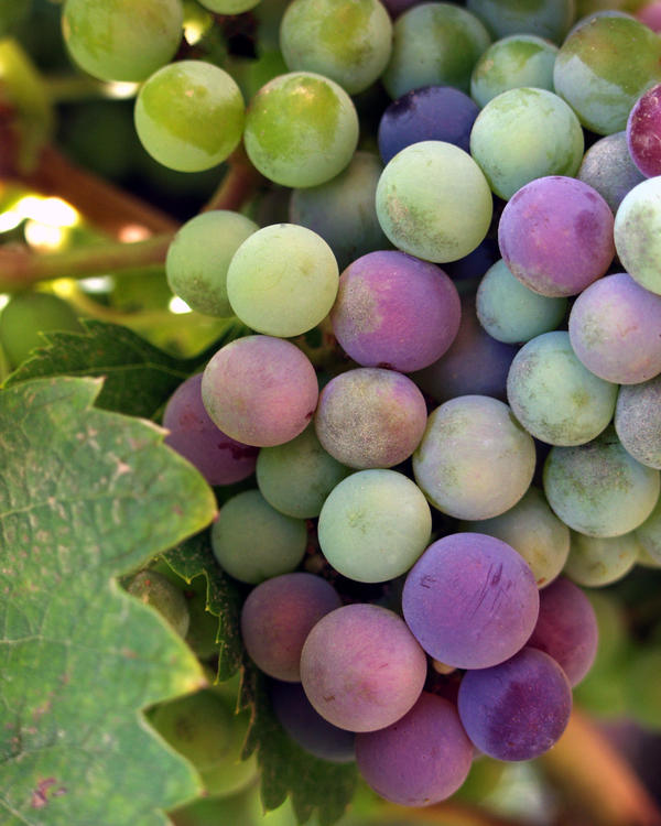 How much calcium is in grapes?