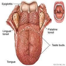 I was just wondering what the bumps on the back of my tounge are? When I swallow I feel like a weird sensation on the back of my thought.