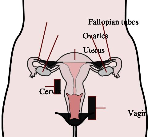 How to get rid of bacterial vaginosis, meds do not work, it keeps coming back. Anything natural i can try to halt this? I am not even sexually active.