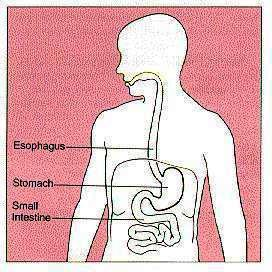 Sore stomach and gas after eating?