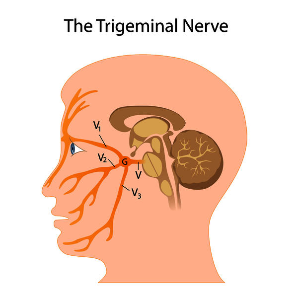 Does migraine affect the trigeminal nerve?
