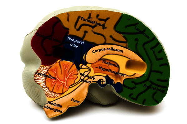 Had a MRI brain scan.Report says prominent virchow-robin spaces in fronto-parietal white matter and basal ganglia.No other abnormality, is this normal?
