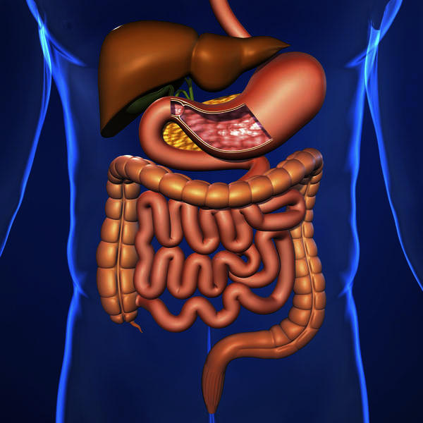 How can you flush out your digestive system?