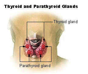 Began Armour Thyroid 2 weeks ago, in perimenopaus, no period for the past three months, just began, is it a good sign armour is working?