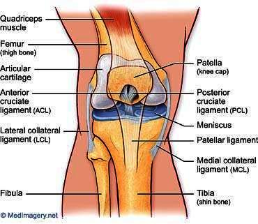 Does an ACL tear still heal if you don't do rehab?