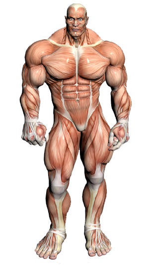 Can you have a muscle disease...If CPK normal 5 times aldolase normal...Emg and ncv normal. Esr normal....Can you still have a muscle disease?
