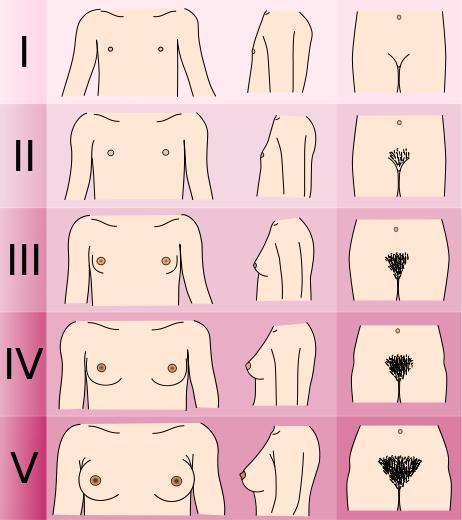 як жінки здоюють грудь посмотрєть