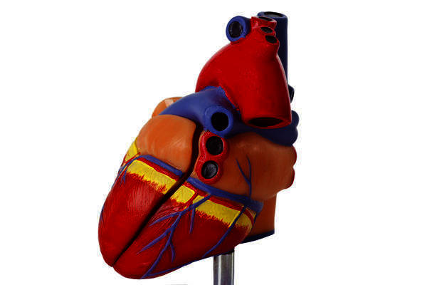 What is the significance of a sticky heart valve?