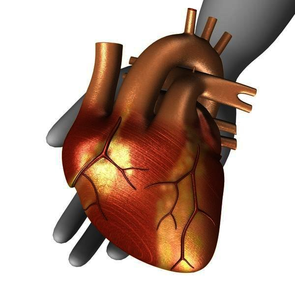 What factors in the body affect the cardiac output?