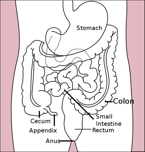 Can anal sex cause stomach problems