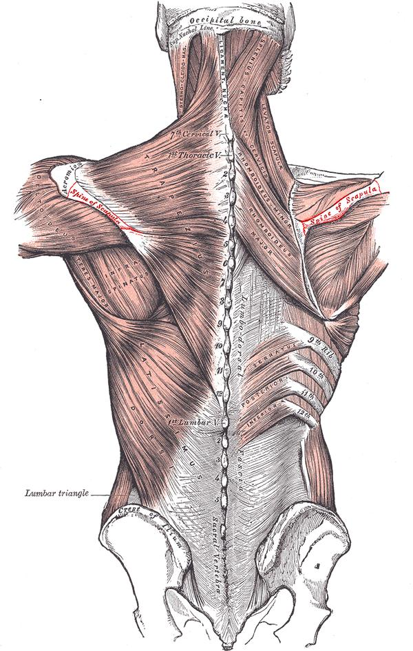 When a person goes in with shoulder pain, why don't they recognize the bone structure of the entire shoulder and arm, one side compared to the other?
