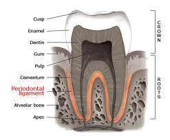 Why is my mouth so tender after root canal therapy?