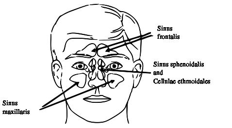 What is mucosal diseases of the paranasal sinuses?