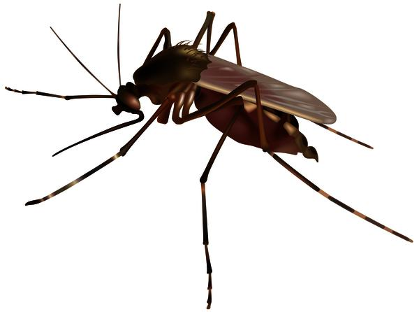 "Which mosquito carries west nile virus? And how can I recognize it? I've heard only one kind of mosquito can actually give you west nile virus. Is there a way to tell if the mosquito that bit me is the ""right"" kind?"