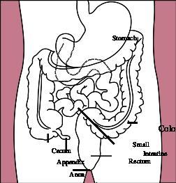 Can appendicitis pain last months?