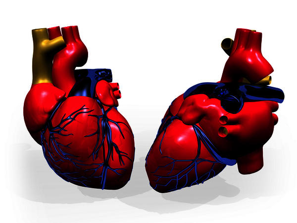 Is there any cure for hypertrophic distinctive cardiomyopathy?