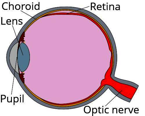 When in diabetes does diabetic retinopathy occur?
