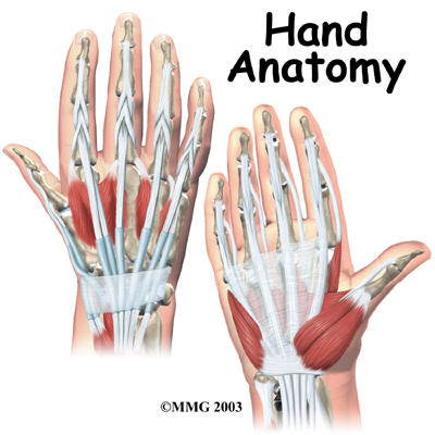 What is in top of right hand other than veins?