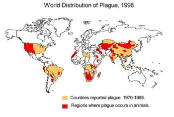Do you think I should be afraid of the bubonic plague?