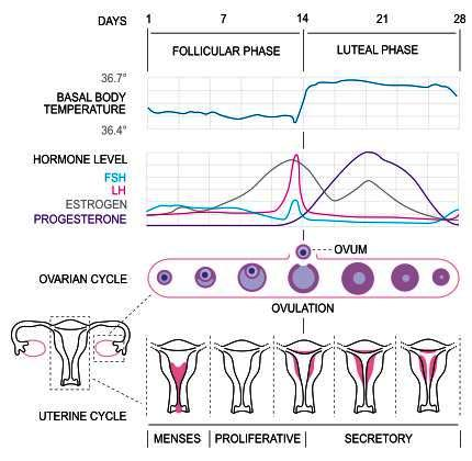I always had a regular period, but i haven't had a period in 3 months. I have every pregnancy symptom, but hpt and blood test were negative. Why?