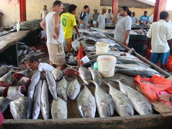 Branzino mercury for Do all fish have mercury