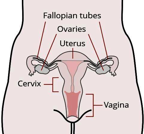 Is pregnancy possible if no penile vaginal sex occurred ?