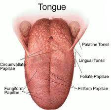 What do bumps on the back of the tongue mean?
