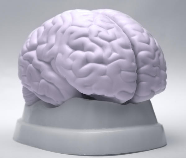 What disease would be indicated if a CT scan showed a reduction of grey and white matter in the brain?