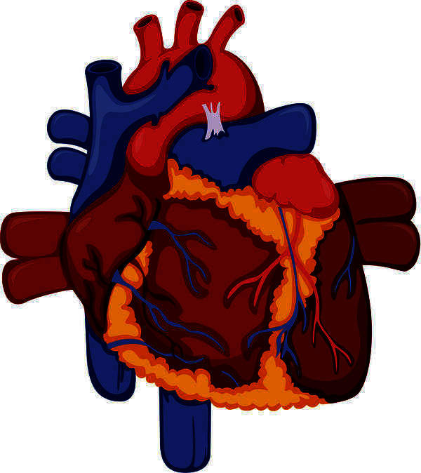 What does a heart failure mean with 30 percent working?