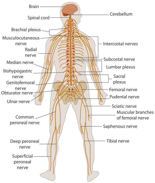 Can A Pinch Nerve Cause Numbness In My Arm And Whole Side Of Body
