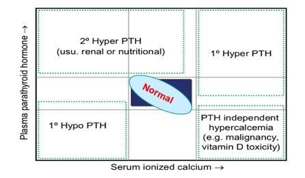 Why would I have high parathyroid levels with a normal blood calcium level?