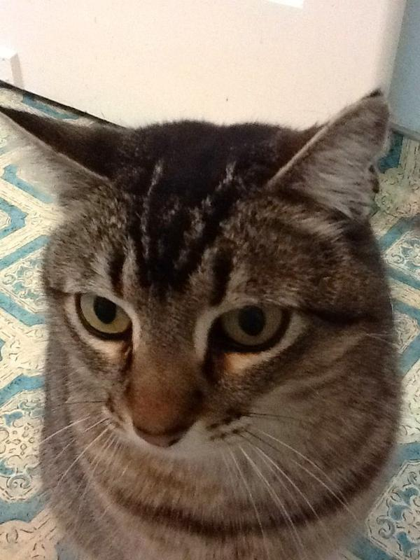 Can I get fleas from my cat?