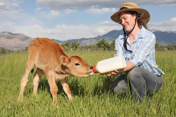 Is rabies virus can harm kids if rabied cows milk consumed?